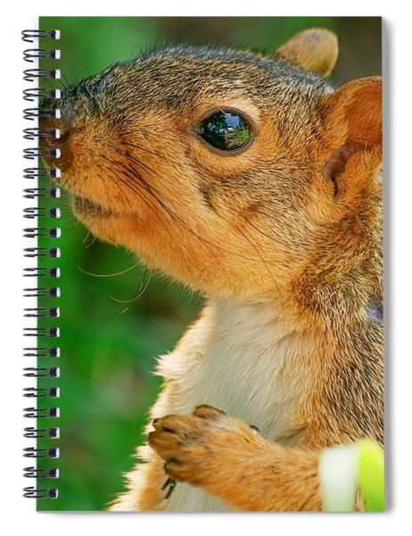 Pondering Squirrel Spiral Notebook
