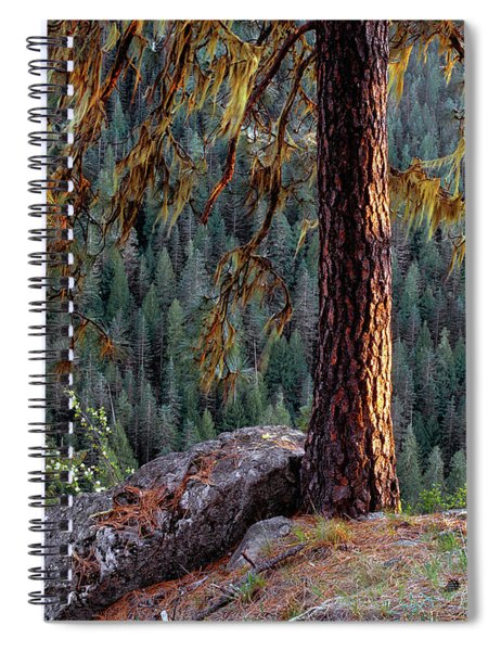 Ponderosa Pine Spiral Notebook