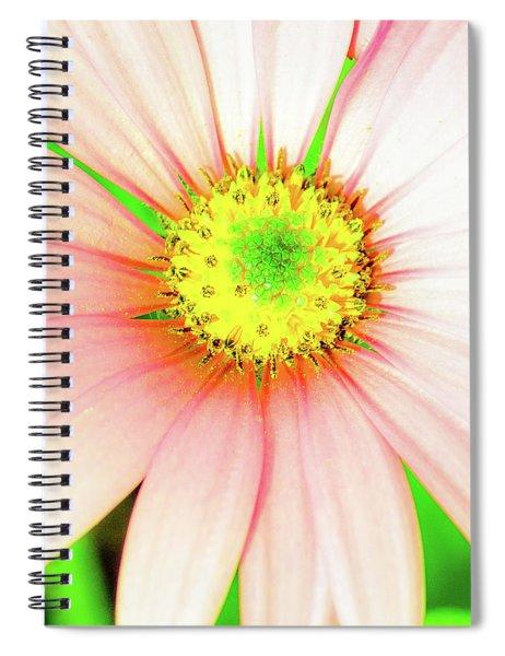Pop Art Osteospermum 1 Spiral Notebook