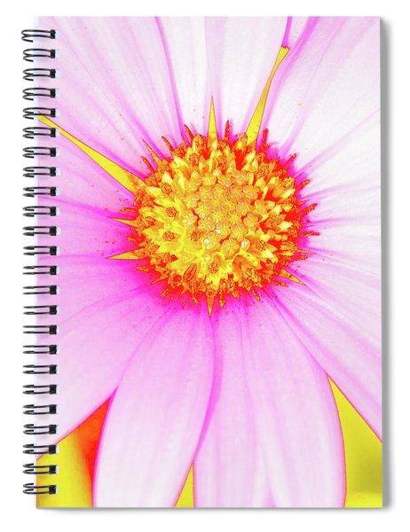 Pop Art Osteospermum 3 Spiral Notebook