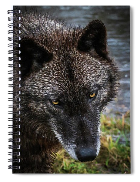 Portrait Niko Spiral Notebook