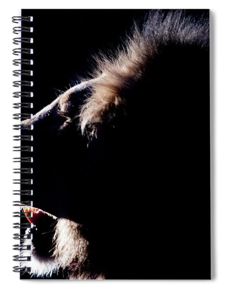 Portrait Of A Backlit Male African Lion Spiral Notebook