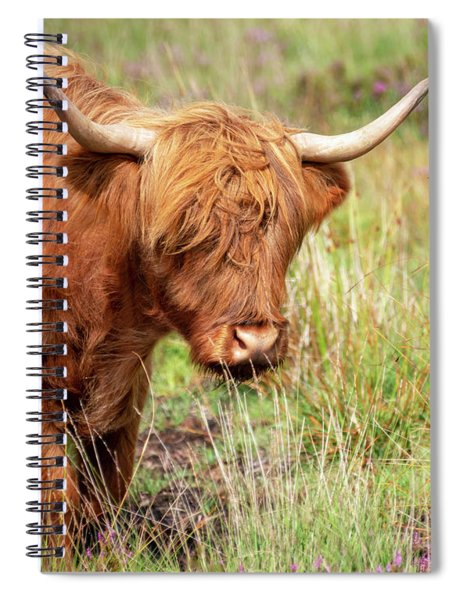 Portrait Of A Highland Cow Spiral Notebook