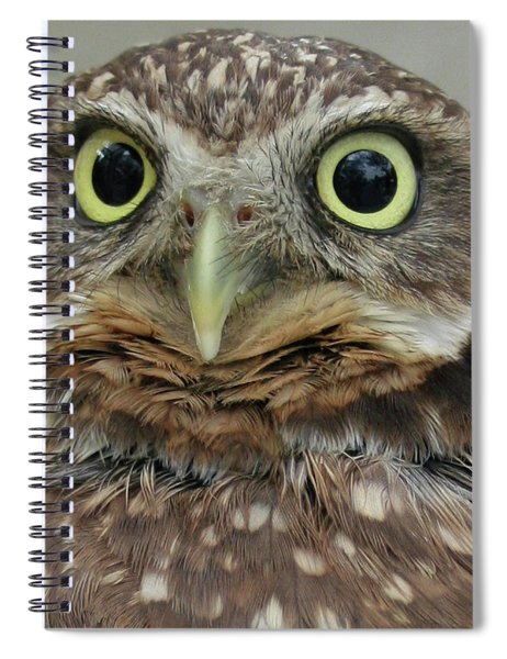 Portrait Of Burrowing Owl Spiral Notebook
