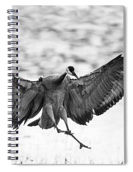 Portrait Of Sandhill Crane Spiral Notebook