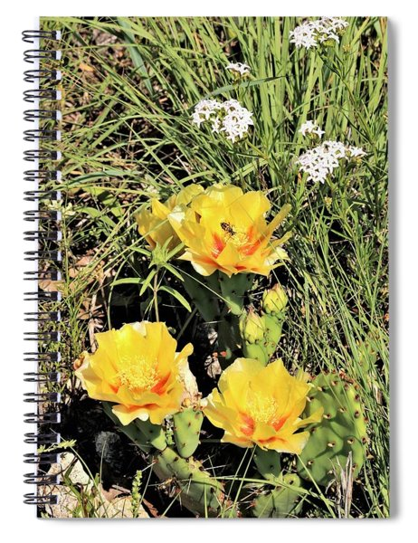 Prickly Pear Cactus In Spring Spiral Notebook