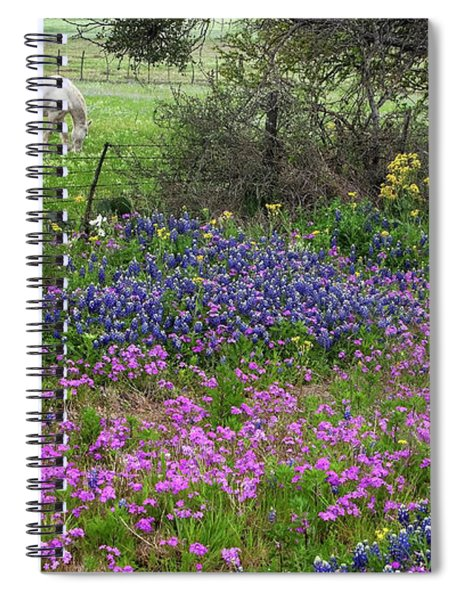 Bluebonnets And Pure Texas  Spiral Notebook