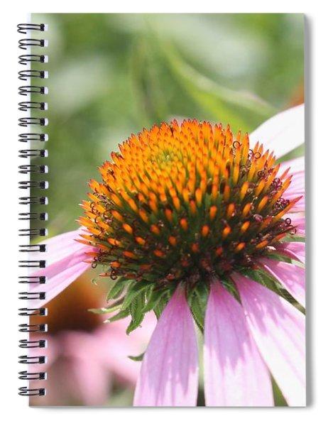 Purple Coneflower Bloom And Petals Spiral Notebook