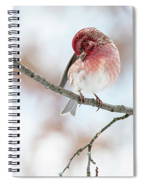 Purple Finch Preening Spiral Notebook