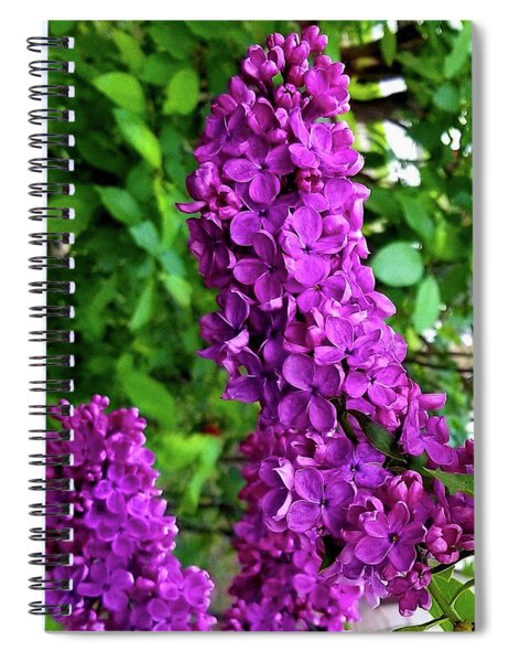 Purple Lilac Parade Spiral Notebook