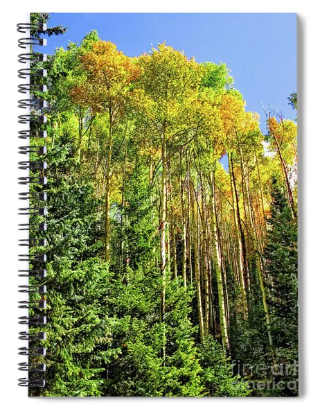 Quaking Aspens Spiral Notebook