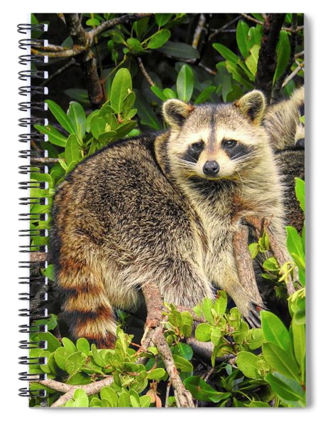 Raccoons In The Mangroves Spiral Notebook