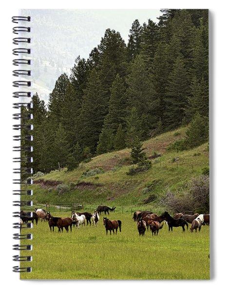 Ranch Horses At Pasture Spiral Notebook