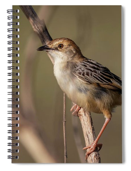 Rattling Cisticola Spiral Notebook