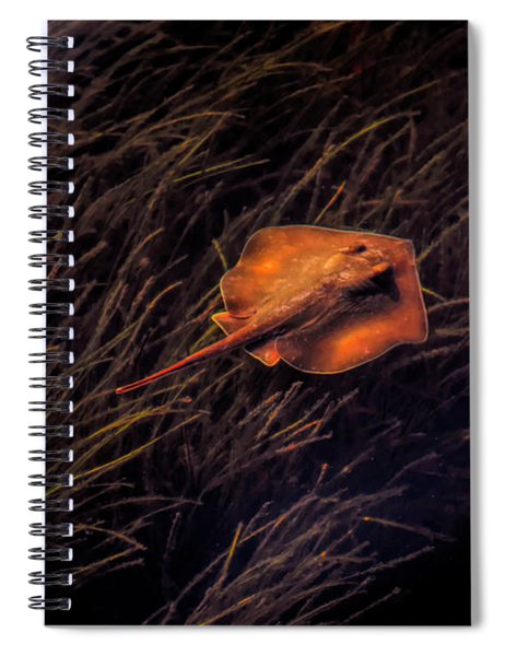 Ray In The Grass Flats Spiral Notebook