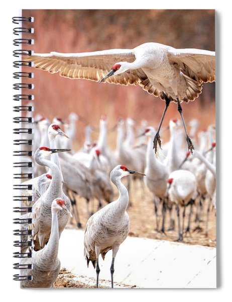 Ready Or Not, Here I Come -- Sandhill Cranes Spiral Notebook
