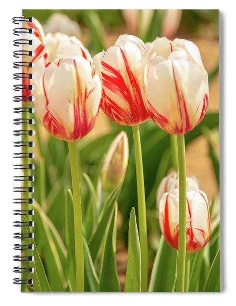 Red And White Beauties Spiral Notebook