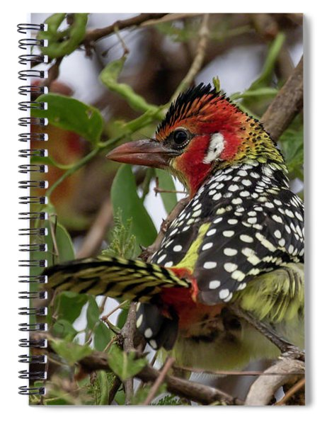 Red-and-yellow Barbet Spiral Notebook