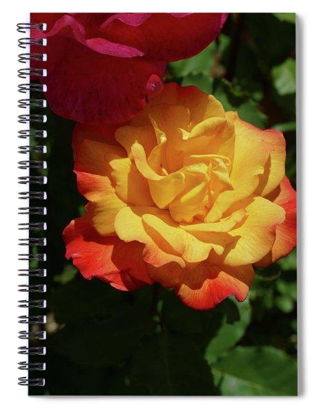 Red And Yellow Rio Samba Roses Spiral Notebook