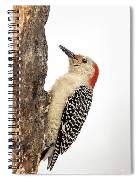 Red-bellied Woodpecker Secret Stash Spiral Notebook