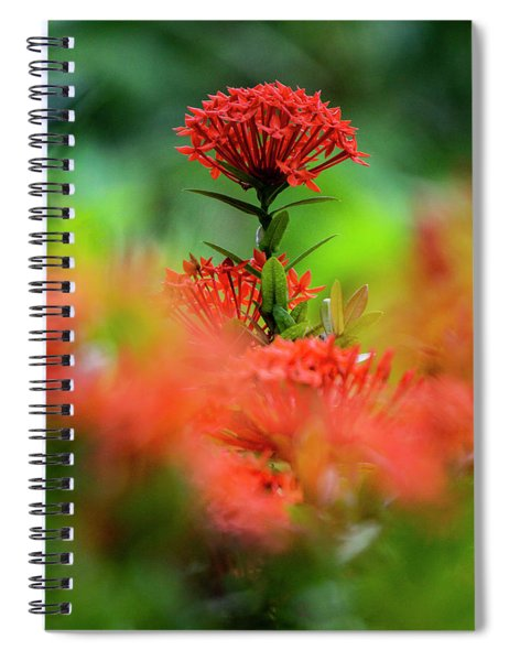 Red Flower Spiral Notebook