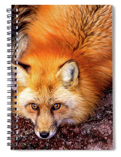 Red Fox In Canyon, Arizona Spiral Notebook