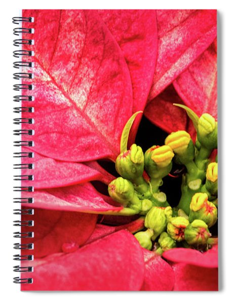Red Poinsettia Spiral Notebook