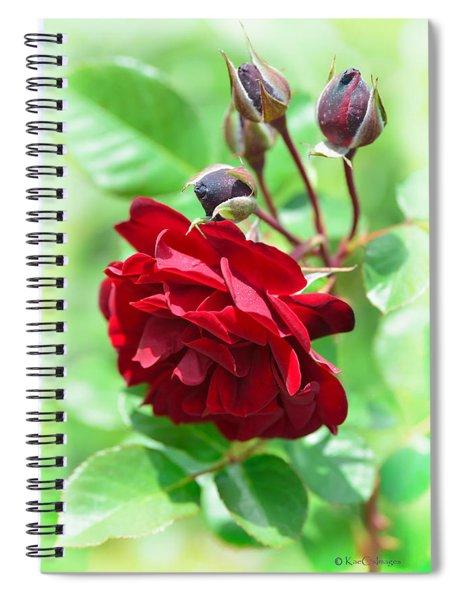 Red Rose #2 Spiral Notebook