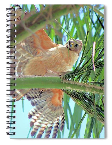 Red-shoulder Hawk Spiral Notebook