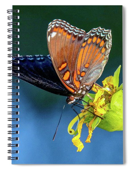 Red-spotted Purple Butterfly Spiral Notebook