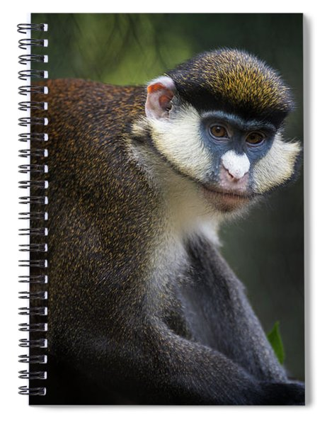 Red-tailed Monkey Spiral Notebook