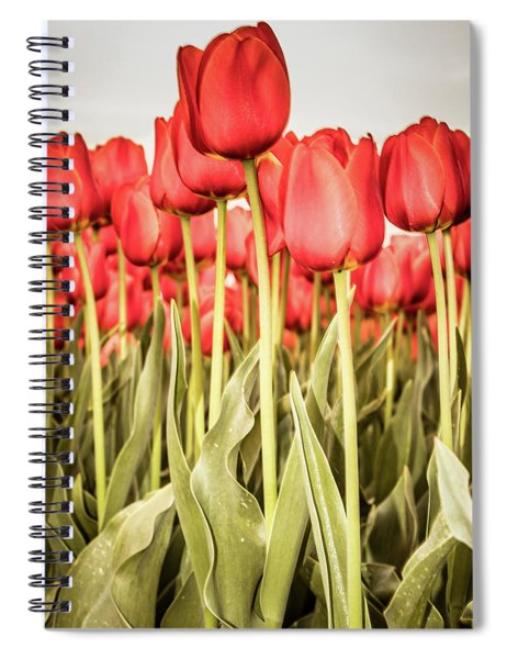 Spiral Notebook featuring the photograph Red Tulip Field In Portrait Format. by Anjo Ten Kate