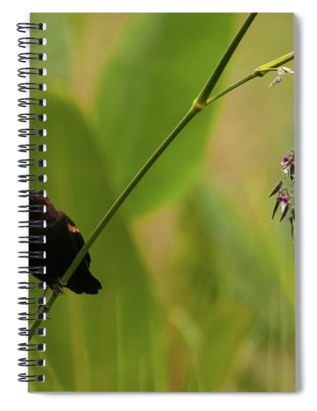 Red-winged Blackbird On Alligator Flag Spiral Notebook
