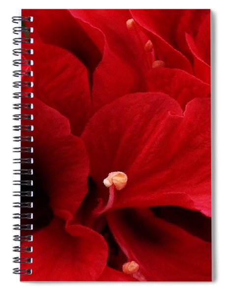 Redreamer 14 X 11 - Signed Spiral Notebook