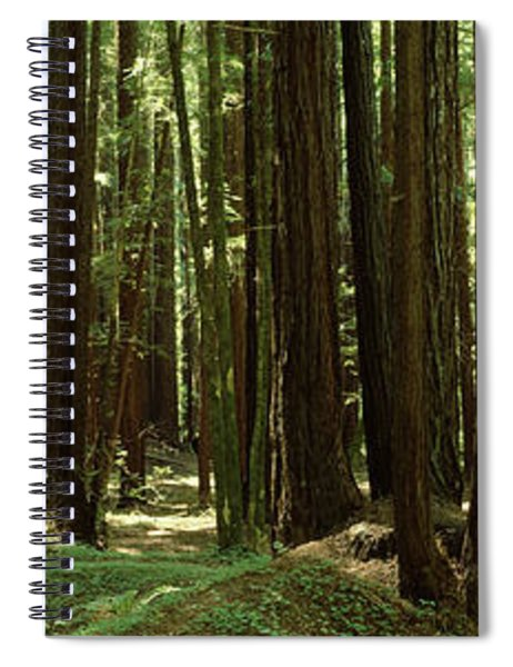 Redwood Trees Armstrong Redwoods St Spiral Notebook