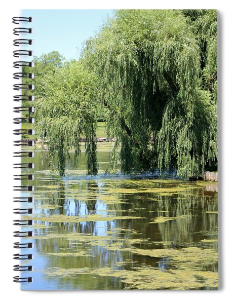 Reflections From Mother Willow Spiral Notebook