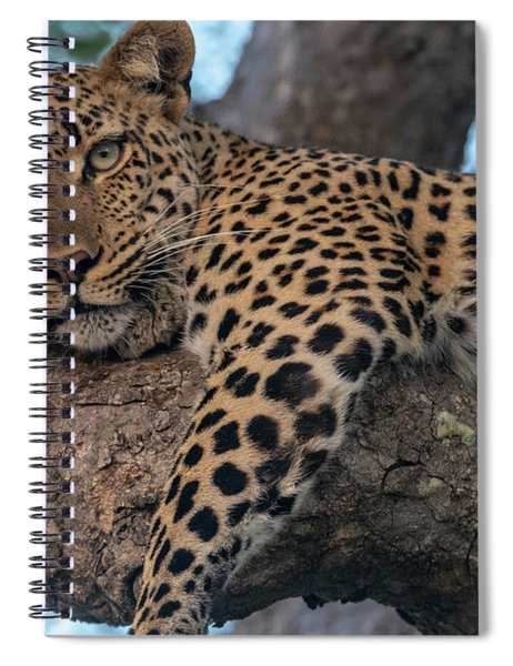 Relaxed Leopard Spiral Notebook