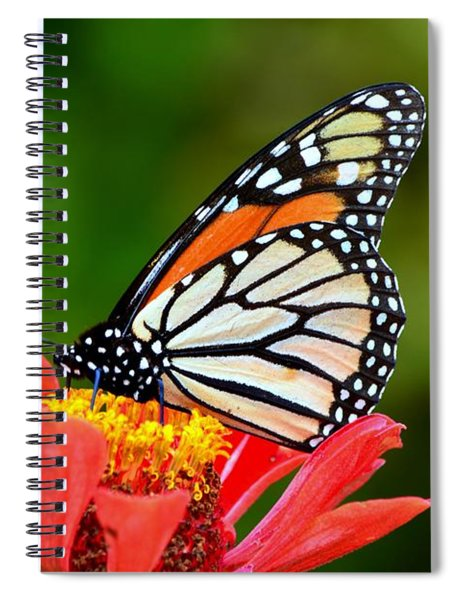 Remembrance Sweet Angel Boy  Spiral Notebook