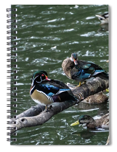 Resting Ducks Spiral Notebook