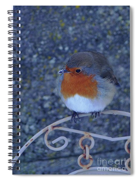 Robin Redbreast Spiral Notebook