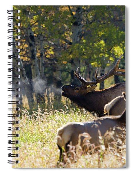 Rocky Mountain Bull Elk Bugeling Spiral Notebook