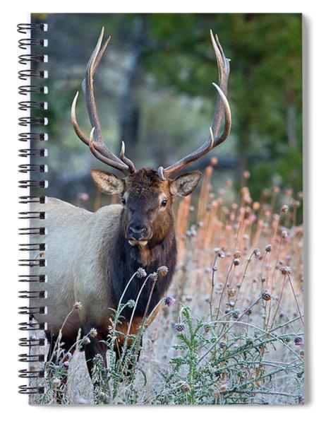 Rocky Mountain Wildlife Bull Elk Sunrise Spiral Notebook