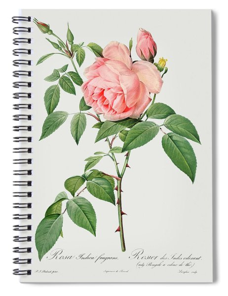 Rosa Indica Fragrans, 1817 Spiral Notebook
