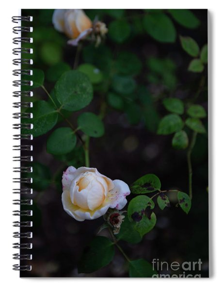 Rose Collection Spiral Notebook