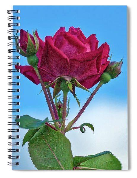 Rose With Buds Spiral Notebook