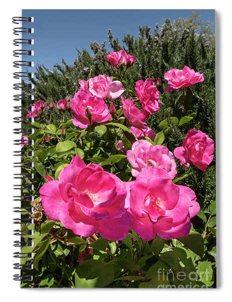 Roses Up To The Sky Spiral Notebook by Arik Baltinester