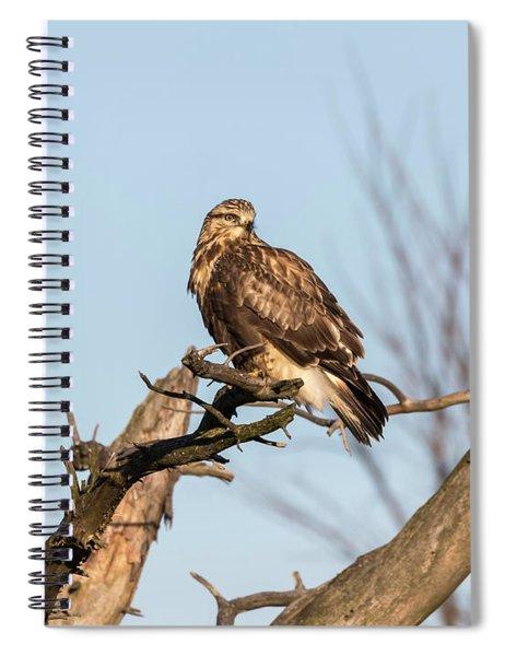 Rough-legged Hawk 2018-4 Spiral Notebook