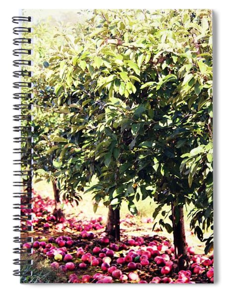 Row Of Red Spiral Notebook