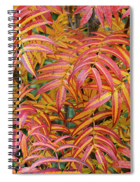 Rowan Olympic Flame Foliage Spiral Notebook