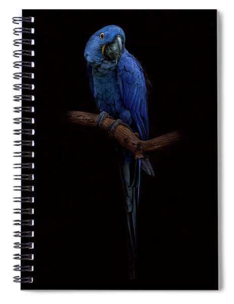 Royal Blue Beauty  Spiral Notebook